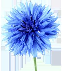 Búzavirág Gyermekekért Egyesület